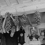 Hanging Tomatoes Art Print