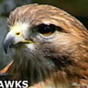 Hawks Mascot 2 Art Print
