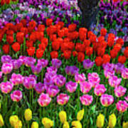 Hidden Garden Of Beautiful Tulips Art Print