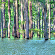 High Bayou Water Art Print