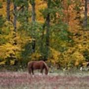Horse In Fall Art Print