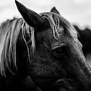 Horse Up-close Art Print
