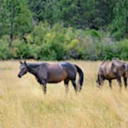 Horses At Pasture Art Print