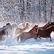 Horses Equus Caballus Running In Snow Art Print