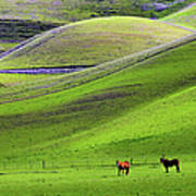Horses In Hill Country Art Print