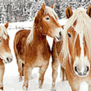 Horses In White Winter Landscape Art Print