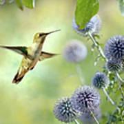 Hovering Hummingbird Art Print