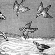 How To Bathe A New Falcon, 14th Century Art Print
