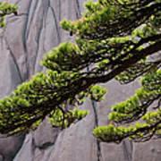 Huang Shan Landscape, China Art Print