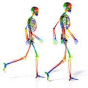 Human Skeleton Pair Art Print