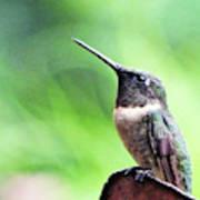 Hummingbird 90 Art Print