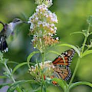 Hummingbird And Monarch Art Print