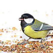 Hungry Bird Art Print