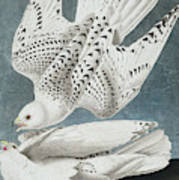 Iceland Falcon Or Jer Falcon By Audubon Art Print