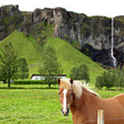 Icelandic Horse And Waterfall, Vik Art Print