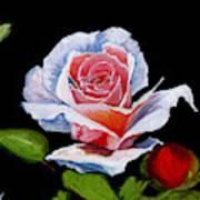 Immaculate Art Print