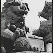 Imperial Lion  Beijing    Art Print