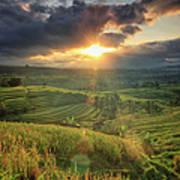 Indonesia, Bali, Jatiluwih Rice Terraces Art Print