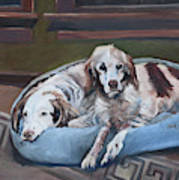 Irish Red And White Setters - Archer Dogs Art Print