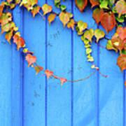 Ivy On The Door Art Print
