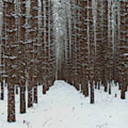 January Forest Art Print