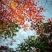 Kuhonbutsu In Autumn Art Print