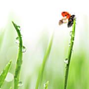 Ladybug On Green Grass Art Print