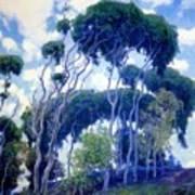 Laguna Eucalyptus 1917 Art Print