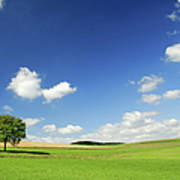 Orange Green Field Lonely Tree Canvas Wall Art Picture Print