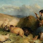 Lassie Herding Sheep Art Print