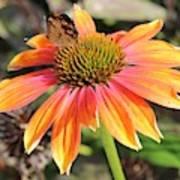 Last Cone Flower Art Print