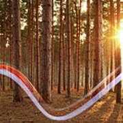 Light Swoosh In Woods Art Print