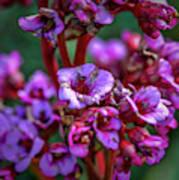 Lilac #h9 Art Print