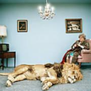 Lion Lying On Rug, Mature Woman Knitting Art Print