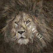 Lion Safari Art Print