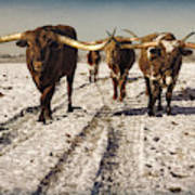 Longhorns in the Snow #2 Art Print