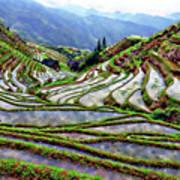 Lonji Rice Terraces Art Print