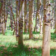 Lost In The Woods - Kenosha Pass, Colorado Art Print