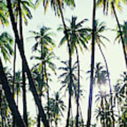 Low Angle View Of Coconut Palm Trees Art Print