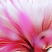 Macro Photo Of A Beautiful Flower. Chrysanthemum. Art Print