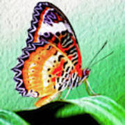 Malay Lacewing Butterfly II Art Print