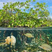 Mangrove Above And Below Water Surface Art Print