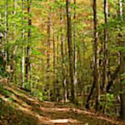 Meigs Creek Trailhead In Smoky Mountains National Park Art Print