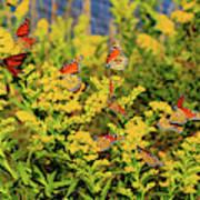 Monarch Gathering 1 Art Print