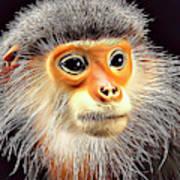 Monkey 2 Art Print