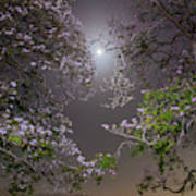 Moonlight And Magic Art Print
