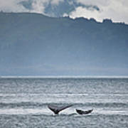 Mother And Calf Whale Tails Megaptera Art Print