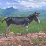 Mountain Donkey  Art Print