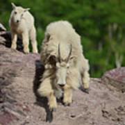 Mountain Goats- Nanny And Kid Art Print
