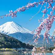 Mt Fuji And Cherry Blossom At Lake Art Print